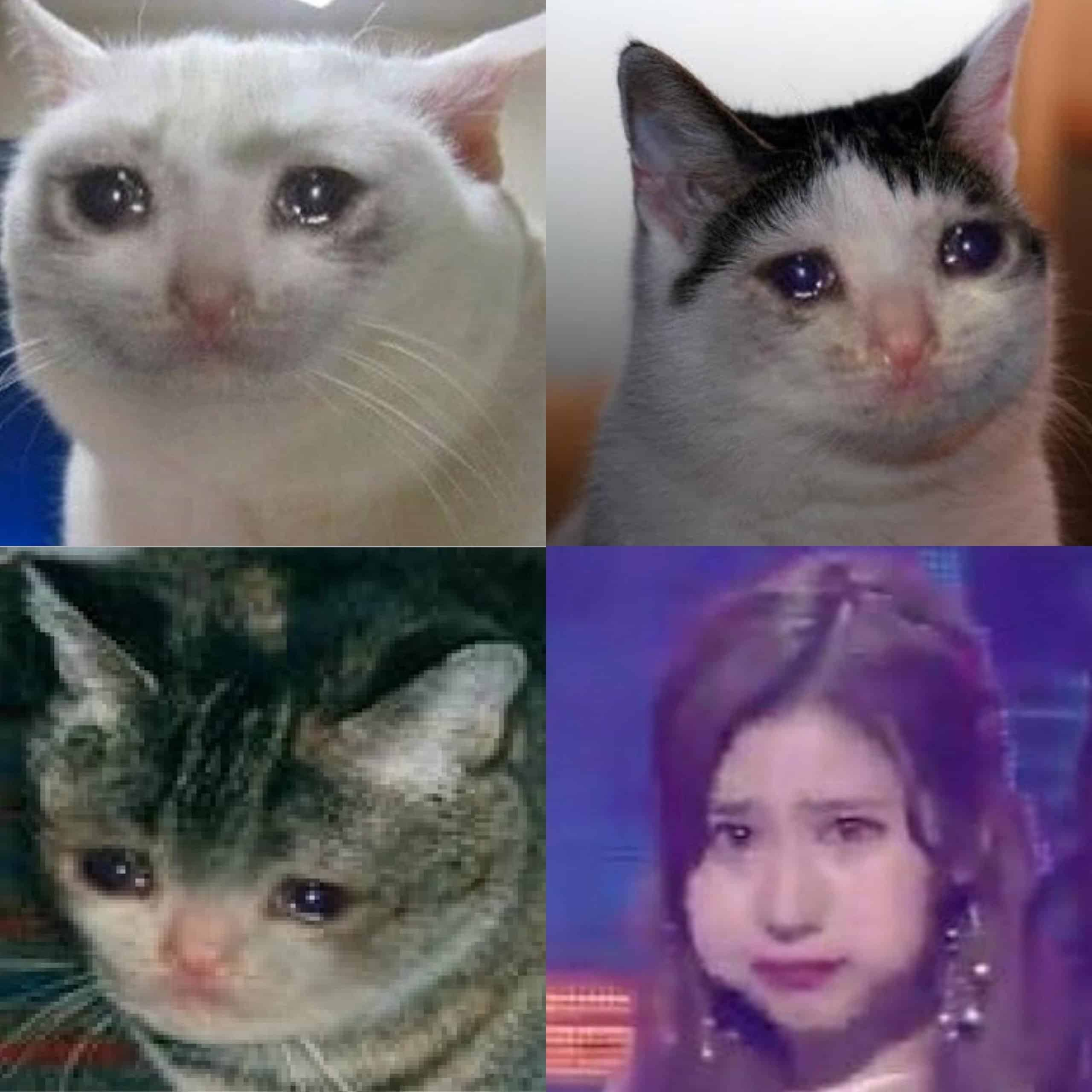 The Very Best Crying Cat Memes Plus Sad Cat Meaning Backstory Strong Socials Funny Memes